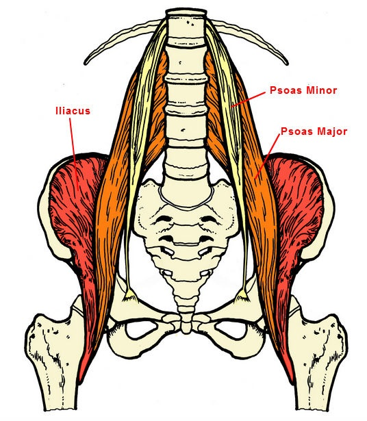back-pain-psoas-muscle